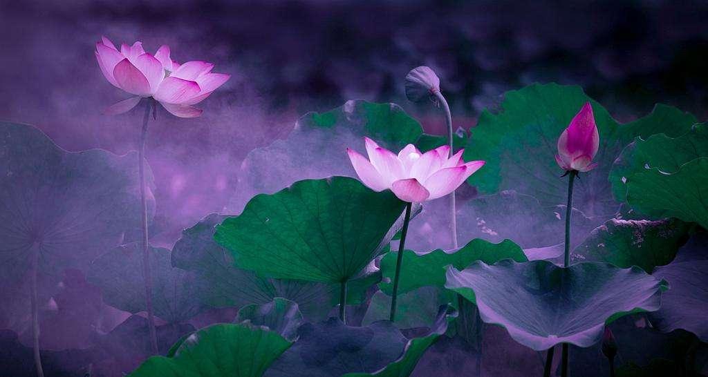 听歌篇《雾里看花》|用慧眼看世界